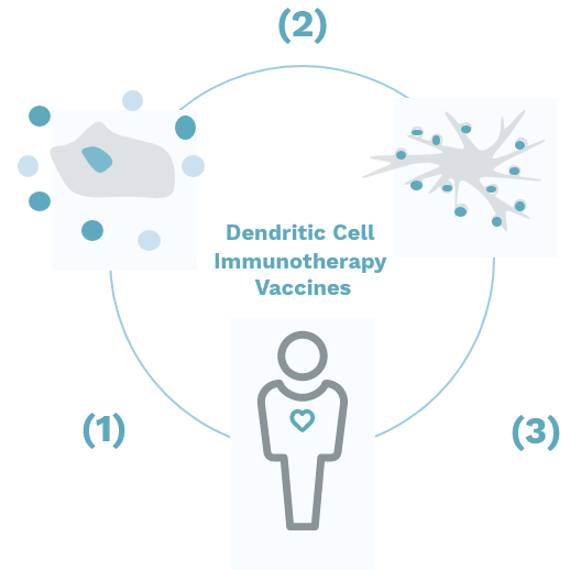 Immucura - Infograph explaining Dendritic Cell Immunotherapy Vaccines